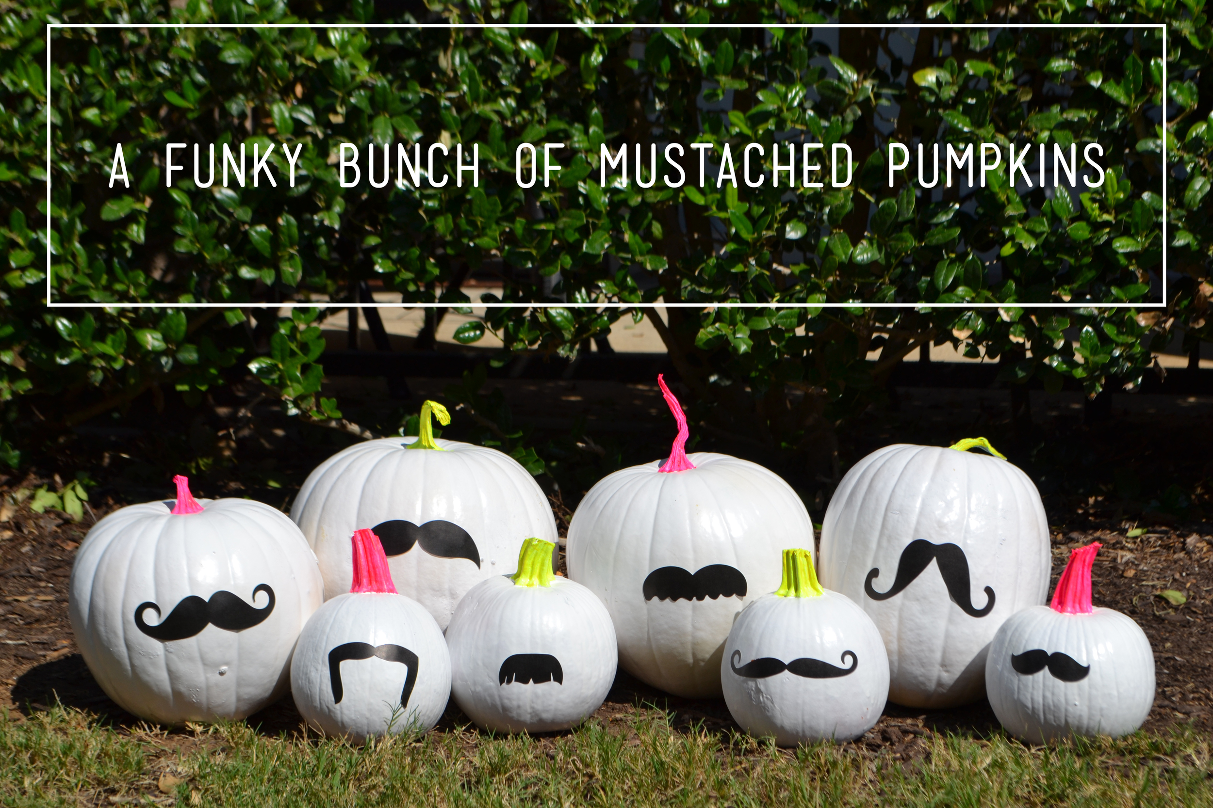 mustache mambiSTICKS on painted pumpkins for Halloween   me & my BIG ideas