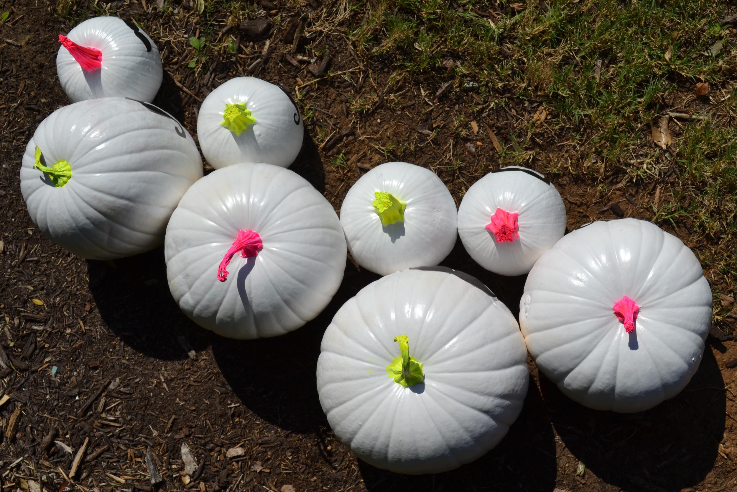 Funky Bunch of Pumpkins 06.jpg