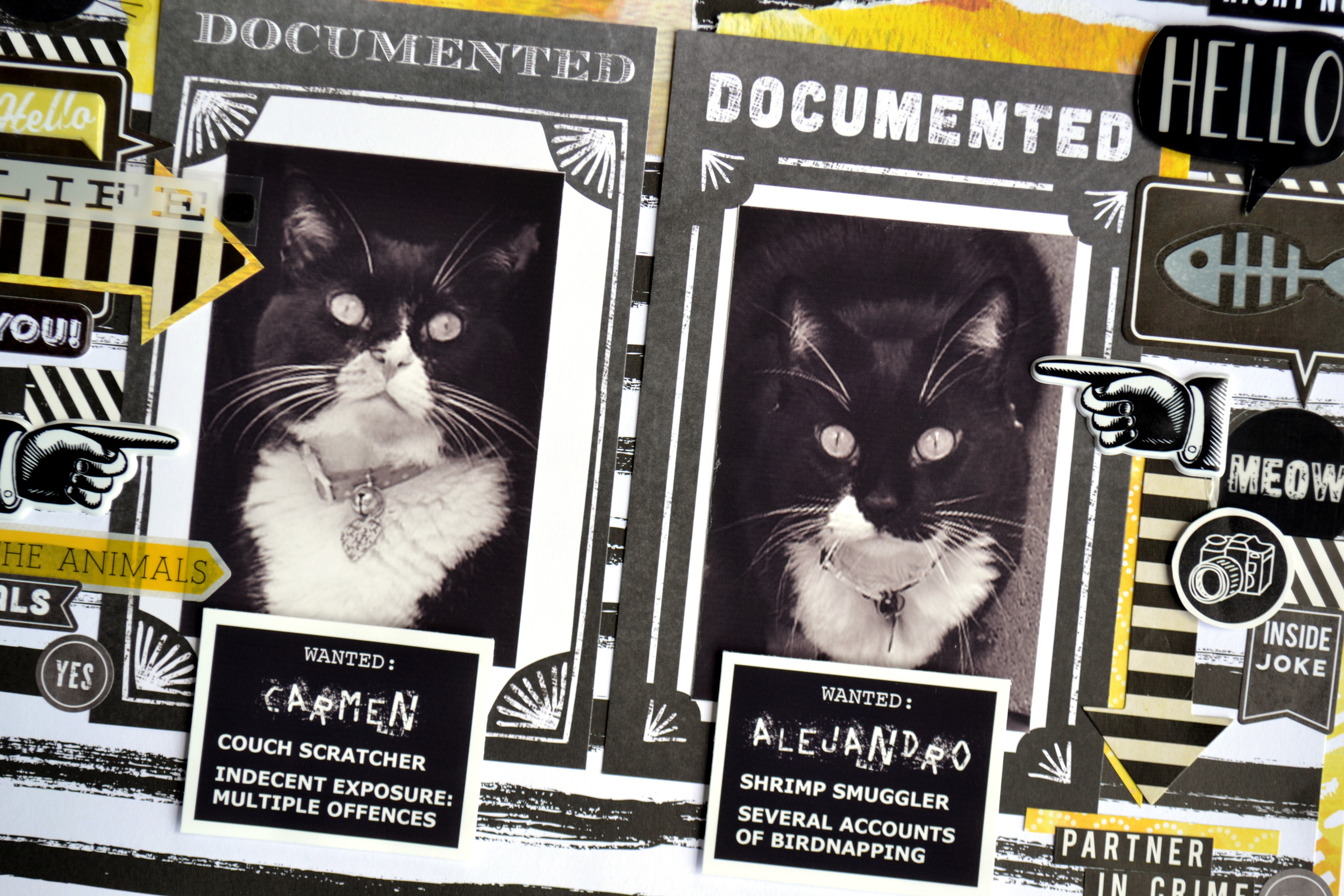 WANTED - kitty mugshots 02 | Amanda Rose blog.jpg