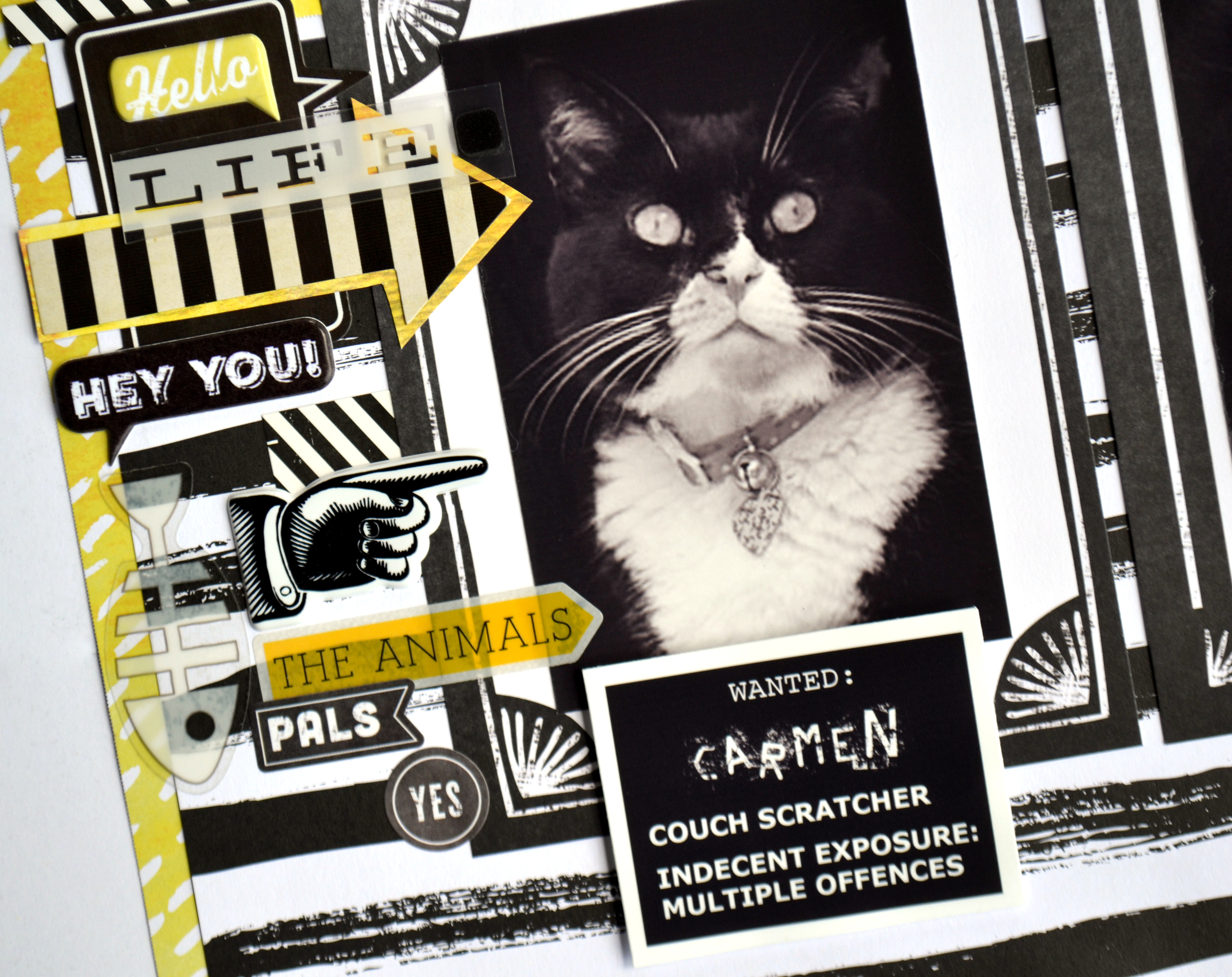WANTED - kitty mugshots 04 | Amanda Rose blog.jpg