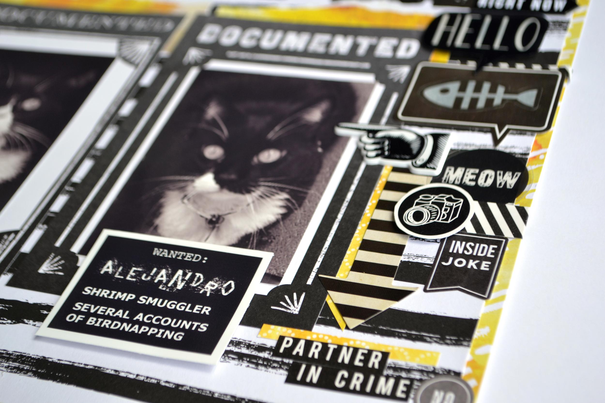WANTED - kitty mugshots 06 | Amanda Rose blog.jpg