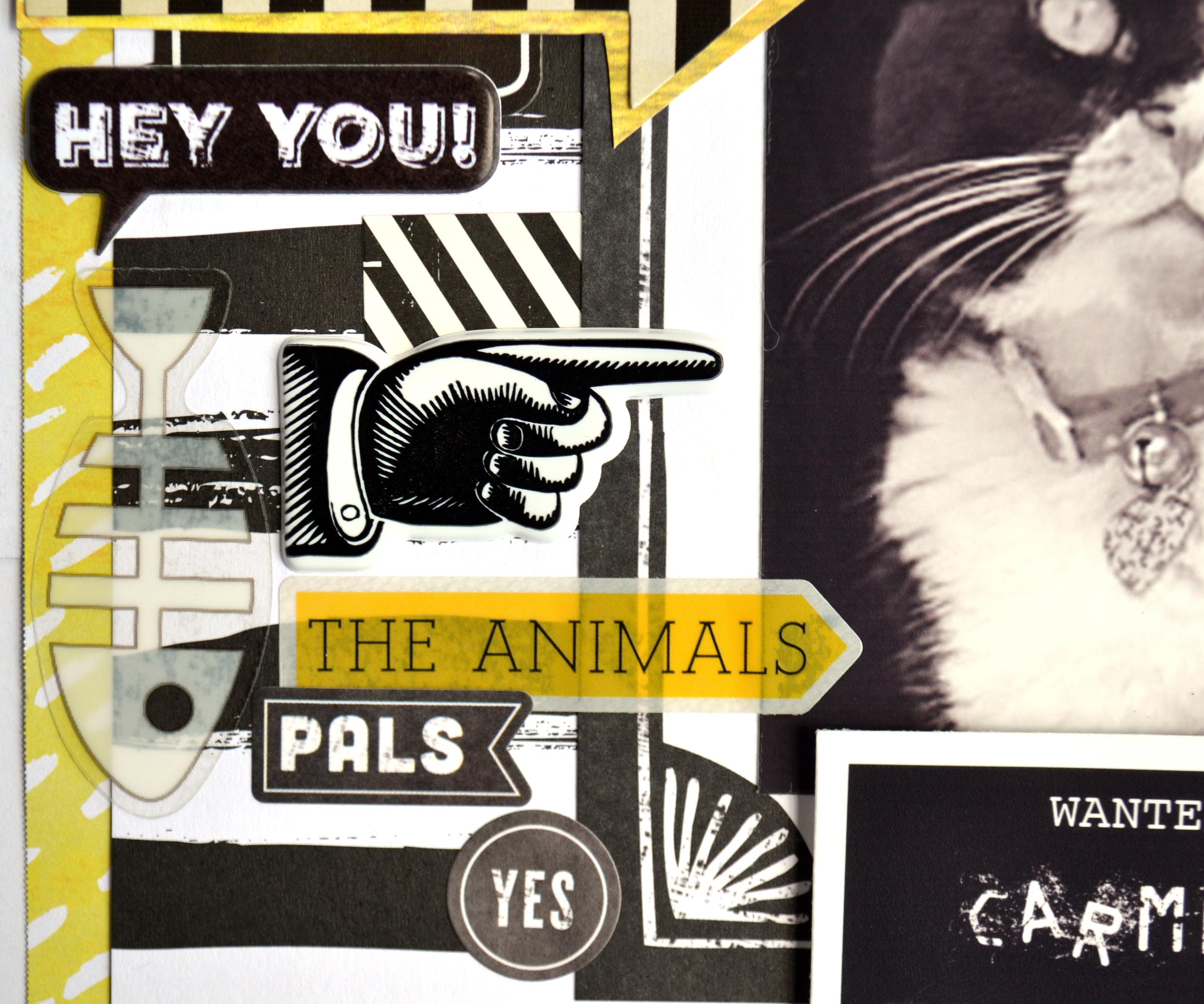 WANTED - kitty mugshots 14 | Amanda Rose blog.jpg