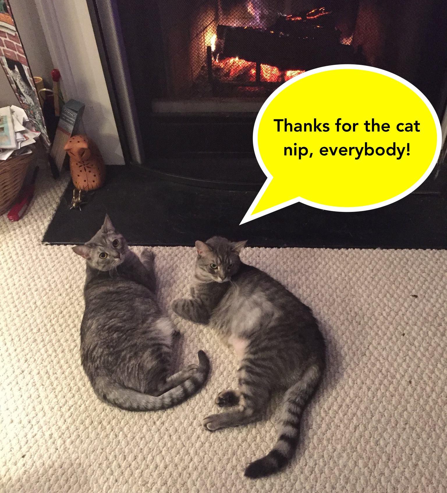 thank you kitties