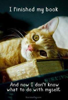 Finished Book Cat