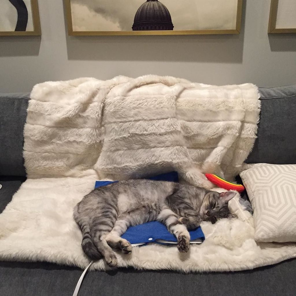 Just a cat, living the dream.