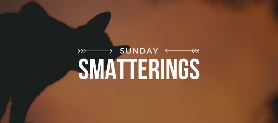 Sunday Smatterings 10.29.17