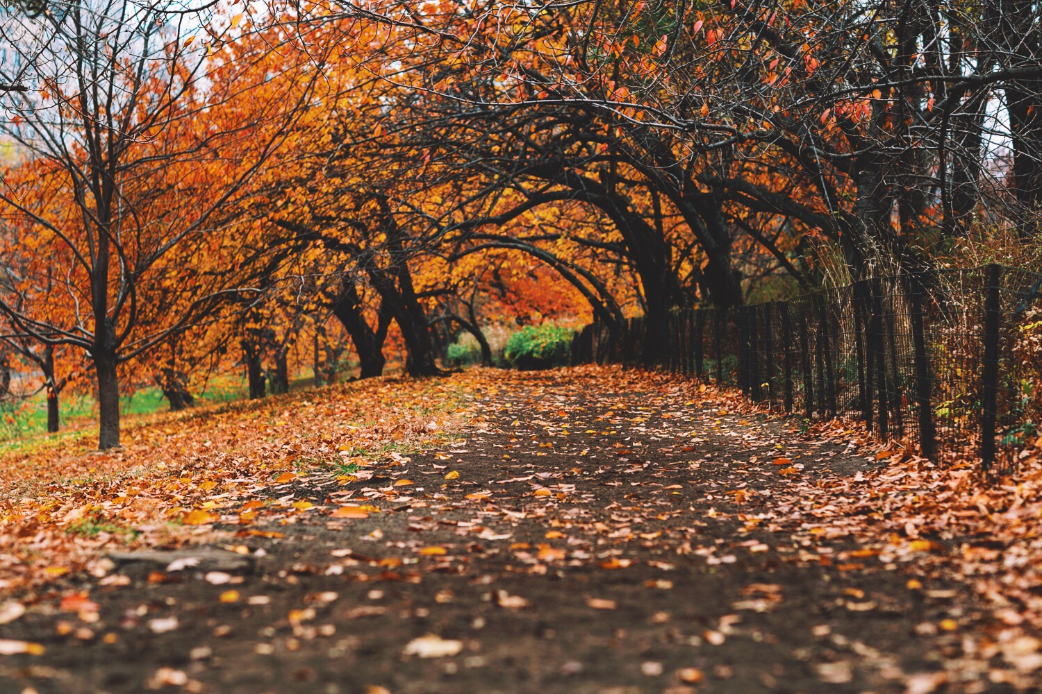 Photo of Central Park Bridle Path by Josh Kill