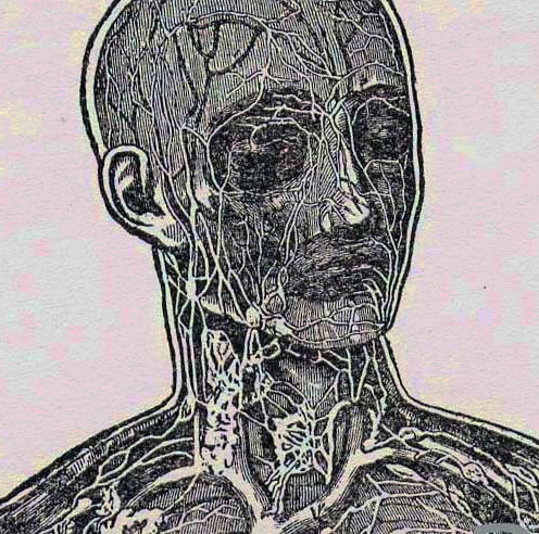 What is the Lymphatic System? -