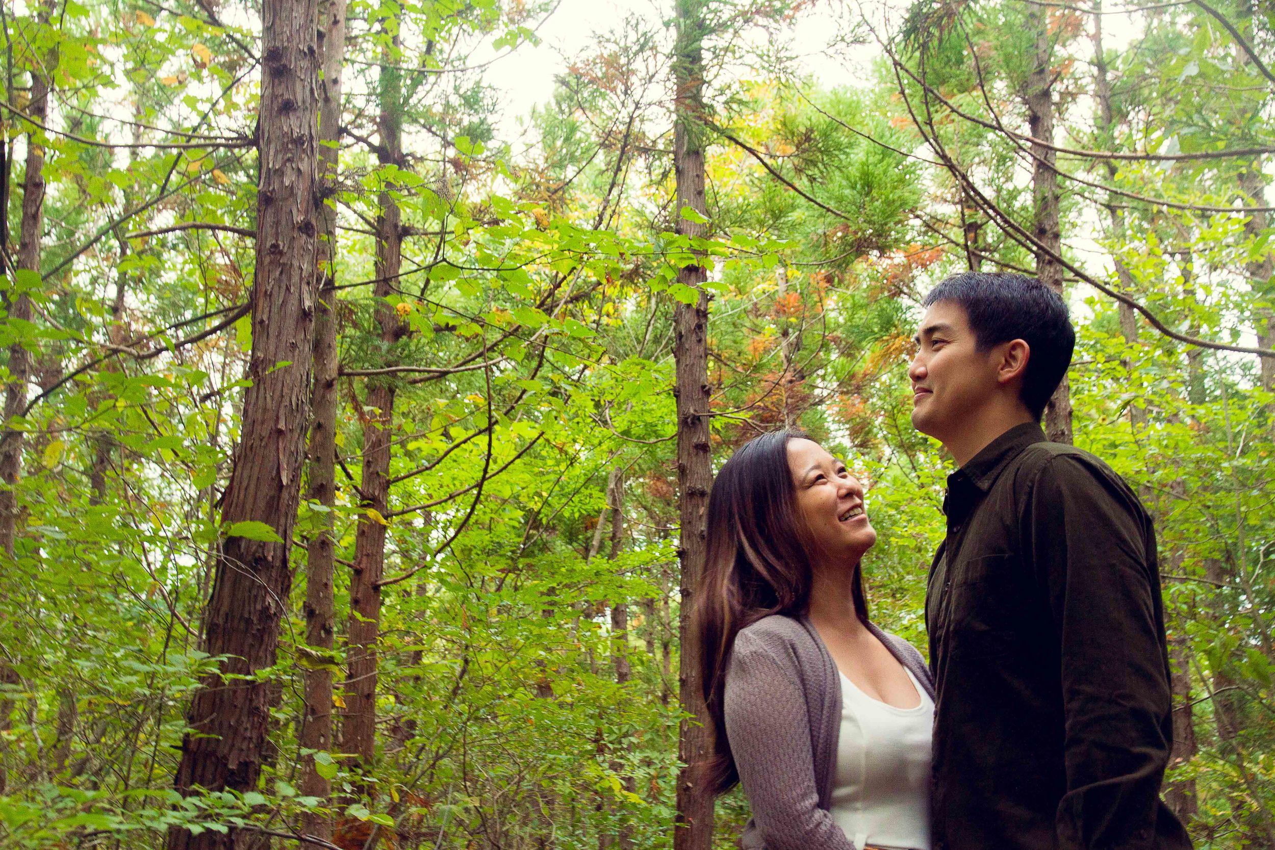 Woodlands 森