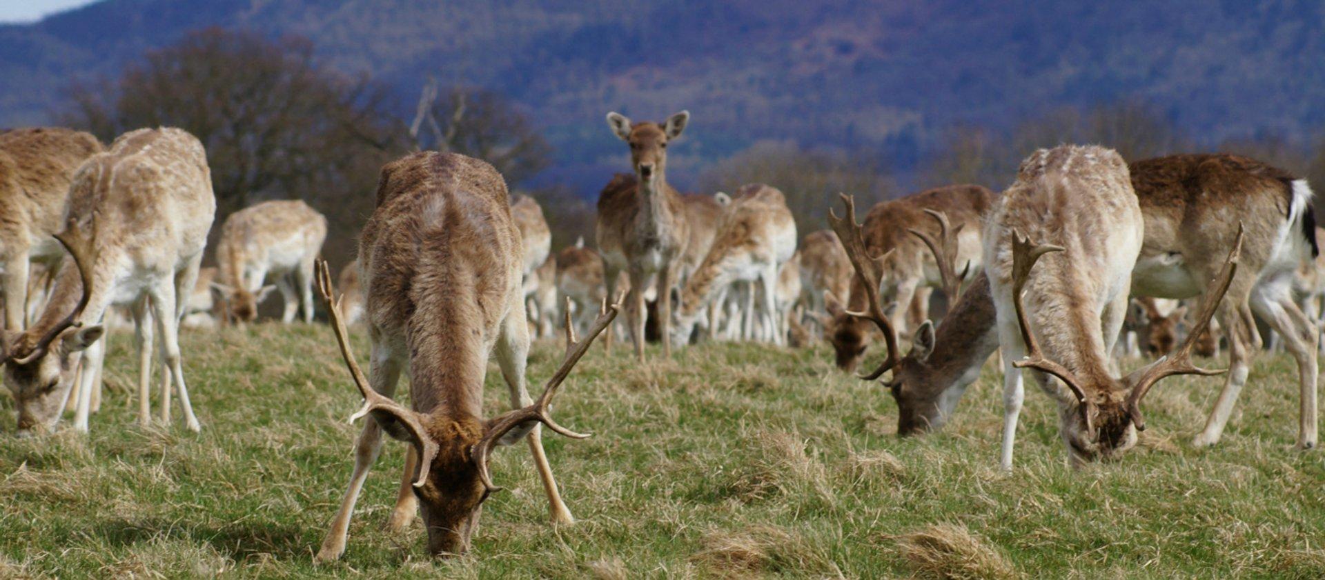 deer park at attingham.jpg