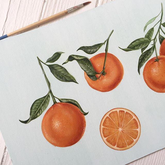 Little citrus study 🍊🎨 #wip #illustrator #citrus #oranges