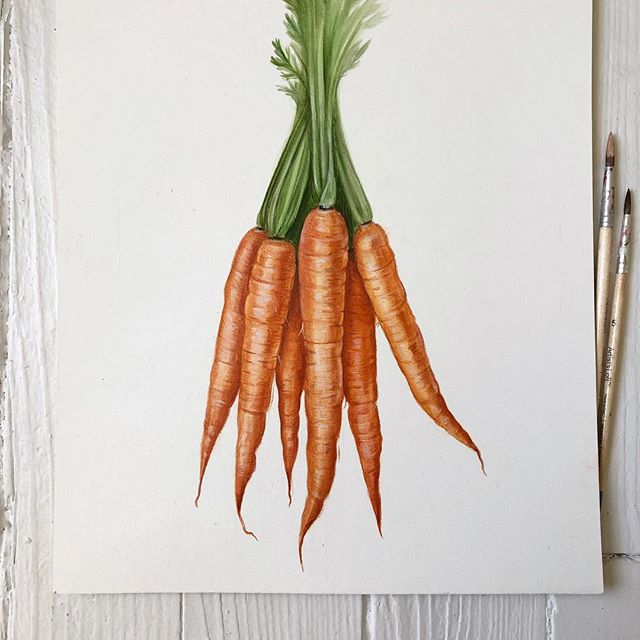 Bit of a theme here lately 🎨 🥕 #carrots #foodillustration #illustrator