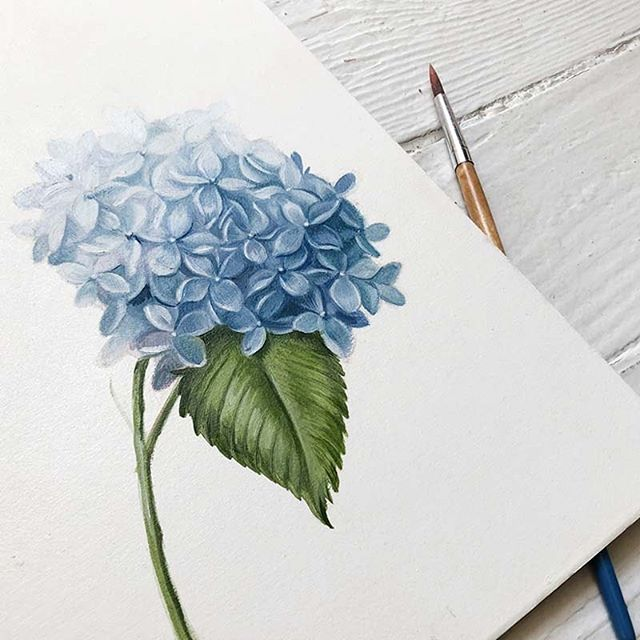 A little piece to make a bigger piece 🎨 #wip #floralillustration #hydrangea