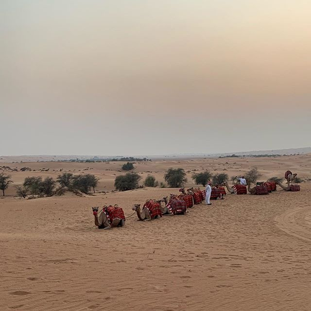 From the middle of the Indian Ocean to the middle of the Dubai desert.