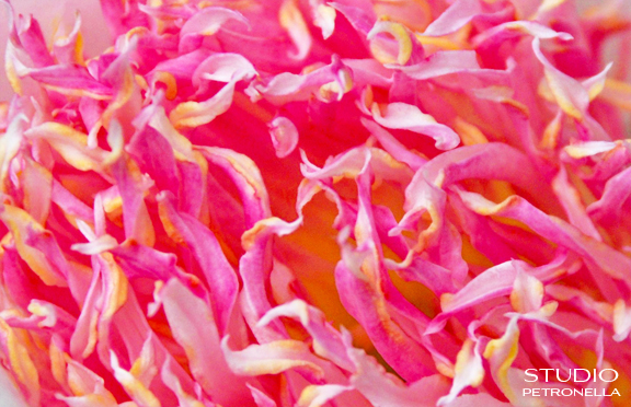%22tender petals the forest of the heart%22  ©  heather rhodes all rights reserved.jpg