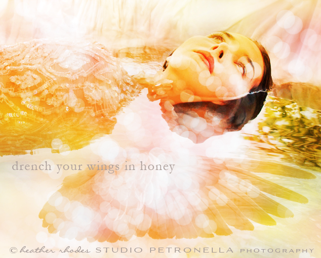 drench your wings © 2014 heather rhodes studio petronella all rights reserved