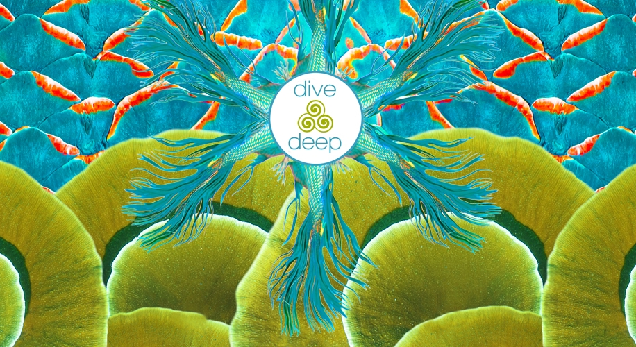 tiwia dive deep homepage banner 9 29 2015.jpg