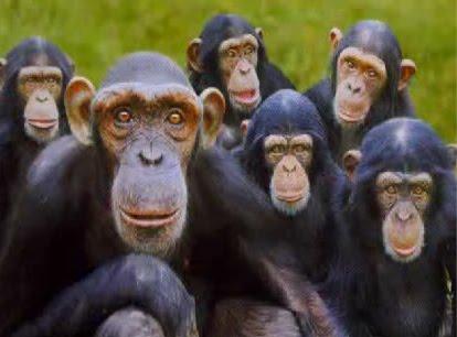 monkeys.jpg