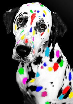 Scrambling to 'get more creative' through 'life hacks' or mind-altering substances makes you a very sad puppy.