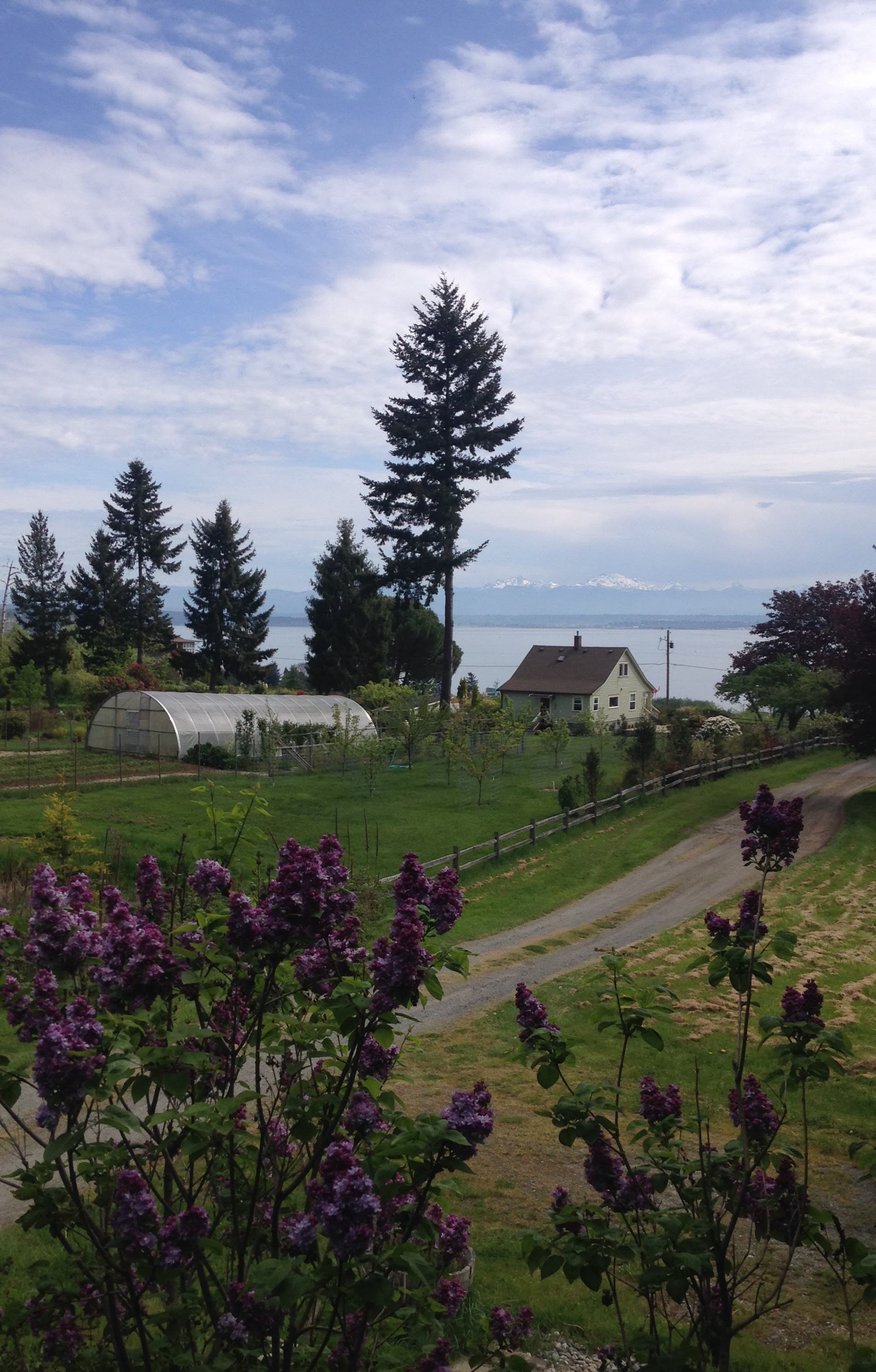 THE 'OLD HOUSE' VIEW on moving day. We'll never know what June and July look like from that deck - but August 2017 through May 2018 were pretty darn lovely.