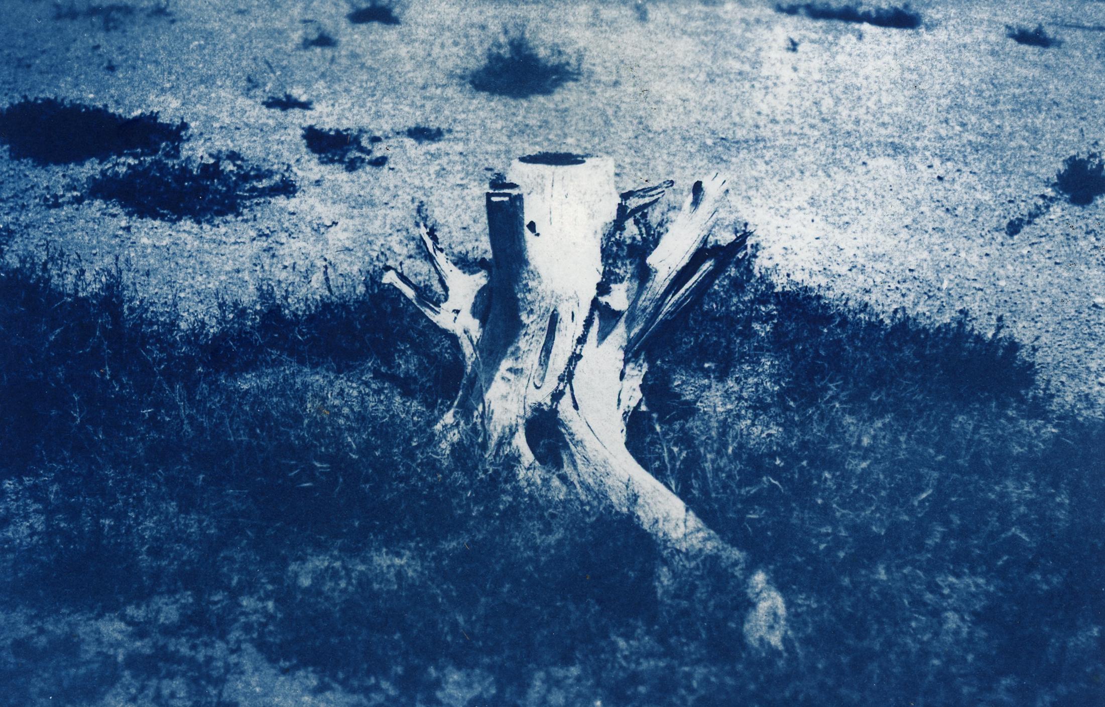 stump1.jpg