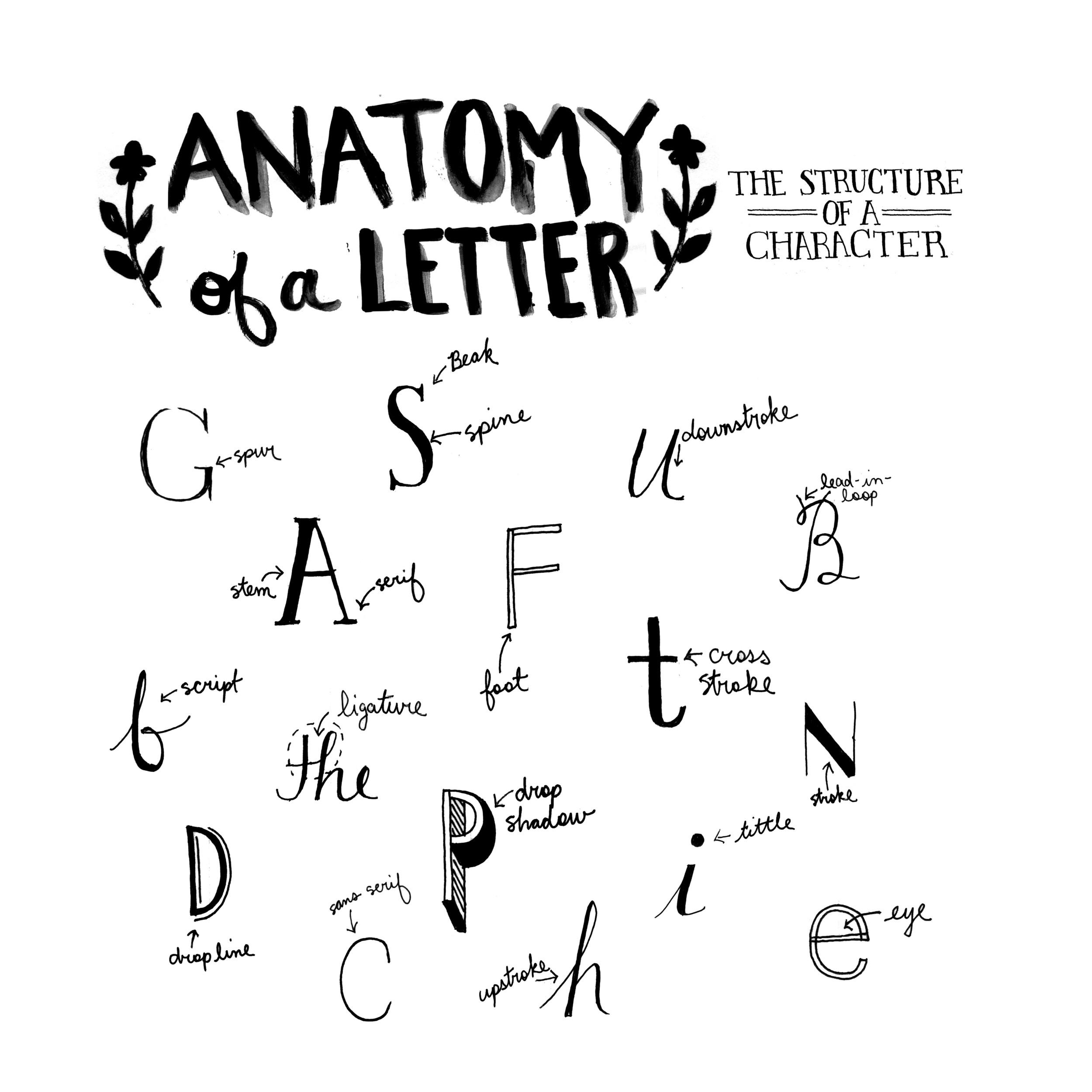 anatomyofaletter.jpg