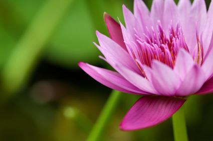 massage flower.jpg