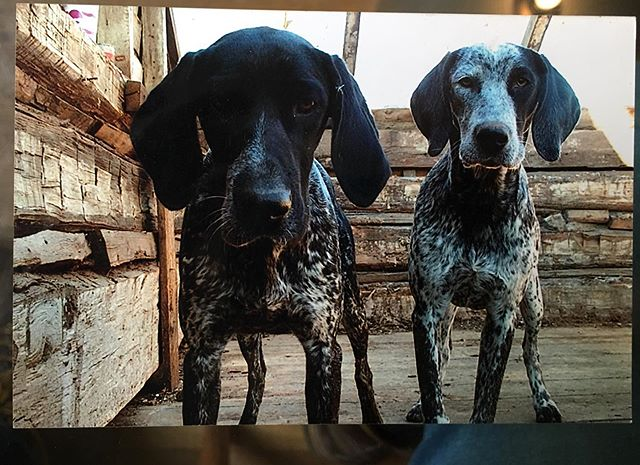 by 2003, when this pic was taken(actual film!), I had moved to NY. I was still taking cabins and barns apart in virginia until around 2004. I met these two german short haired pointers and they came out every day to keep me company. been wanting to do another cabin recently.