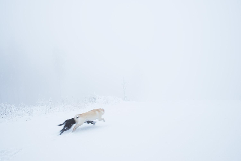 Leda-Lali.jpg