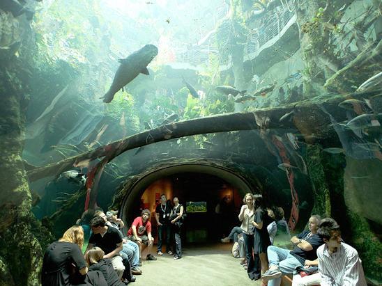 The Lady From Shanghai -  Aquarium