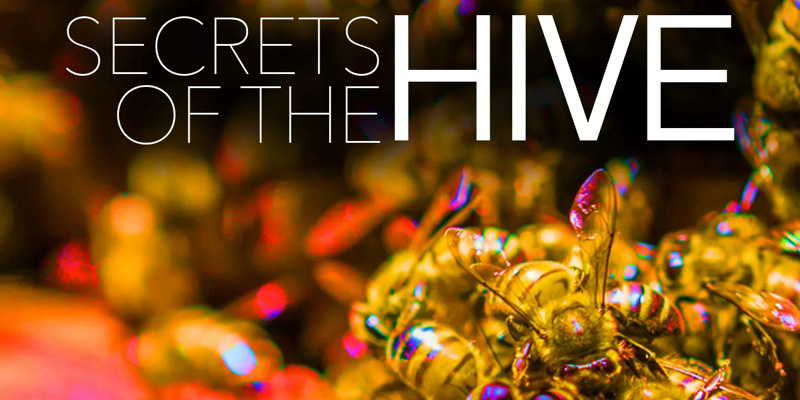 Secrets of the Hive - Secrets of the Hive premiered on the Smithsonian Channel to rave reviews. The feature follows the lives of bees. Dustin patched in with the German production team via Source Connect to narrate the film.
