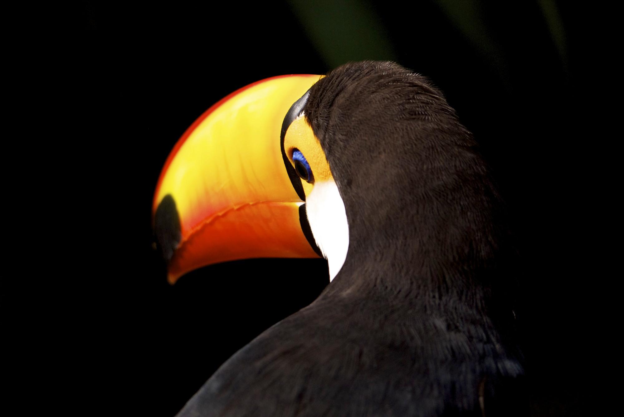 Parque das Aves, Iguacu, Brasil