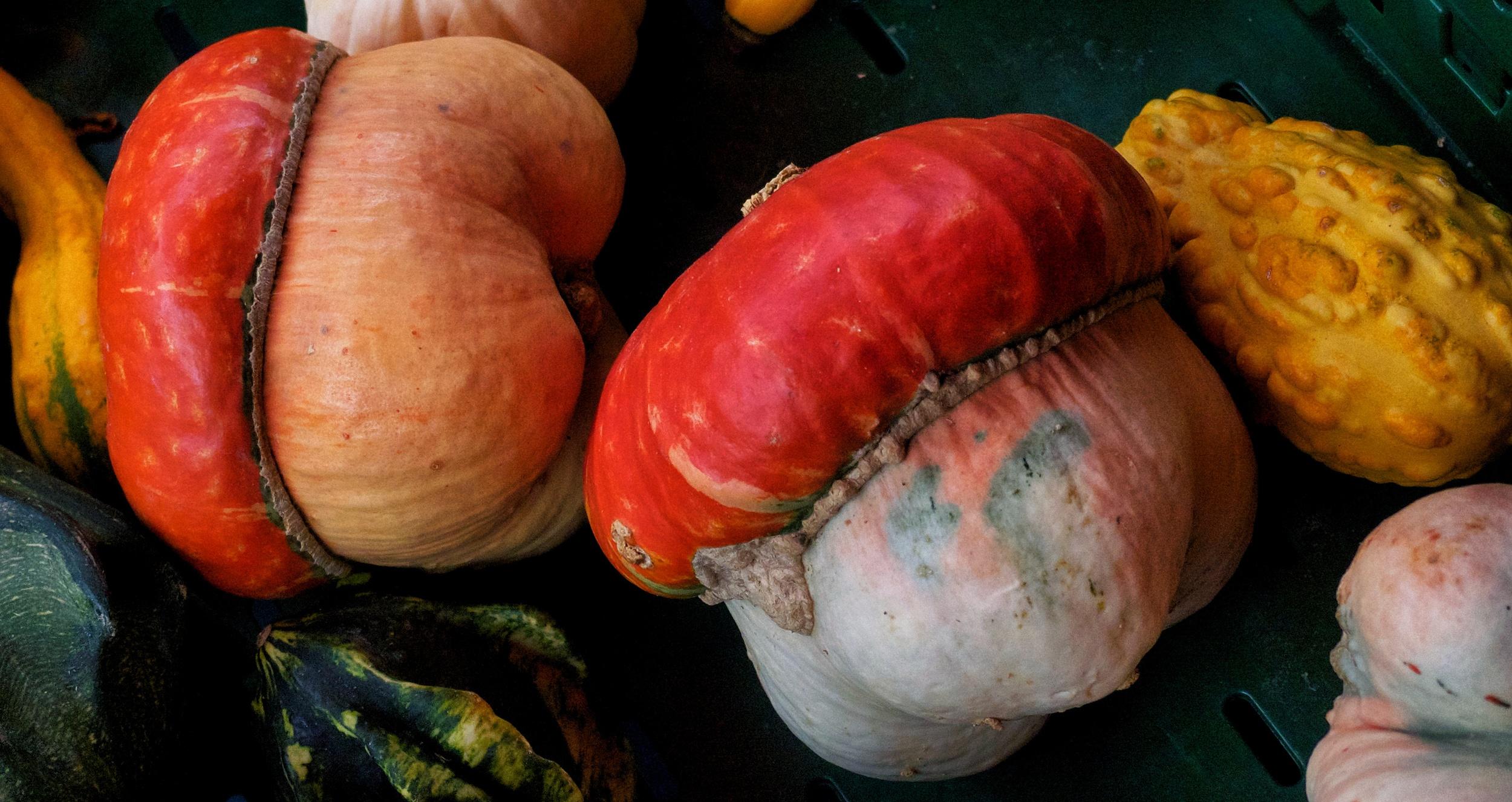Not fungi or magic acorns: Kronberg Market marrows