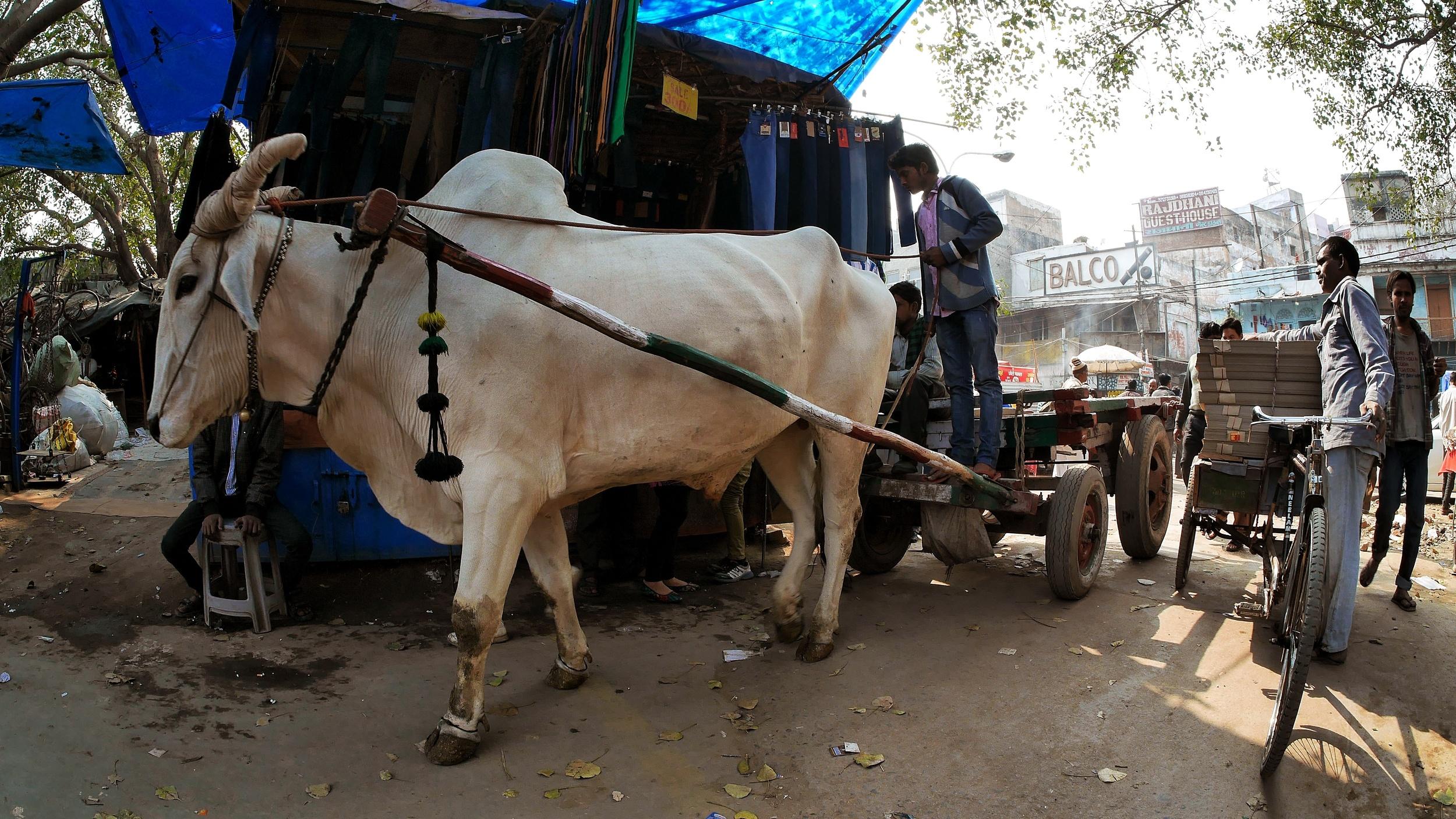 Chandni Chowk, Delhi.jpg