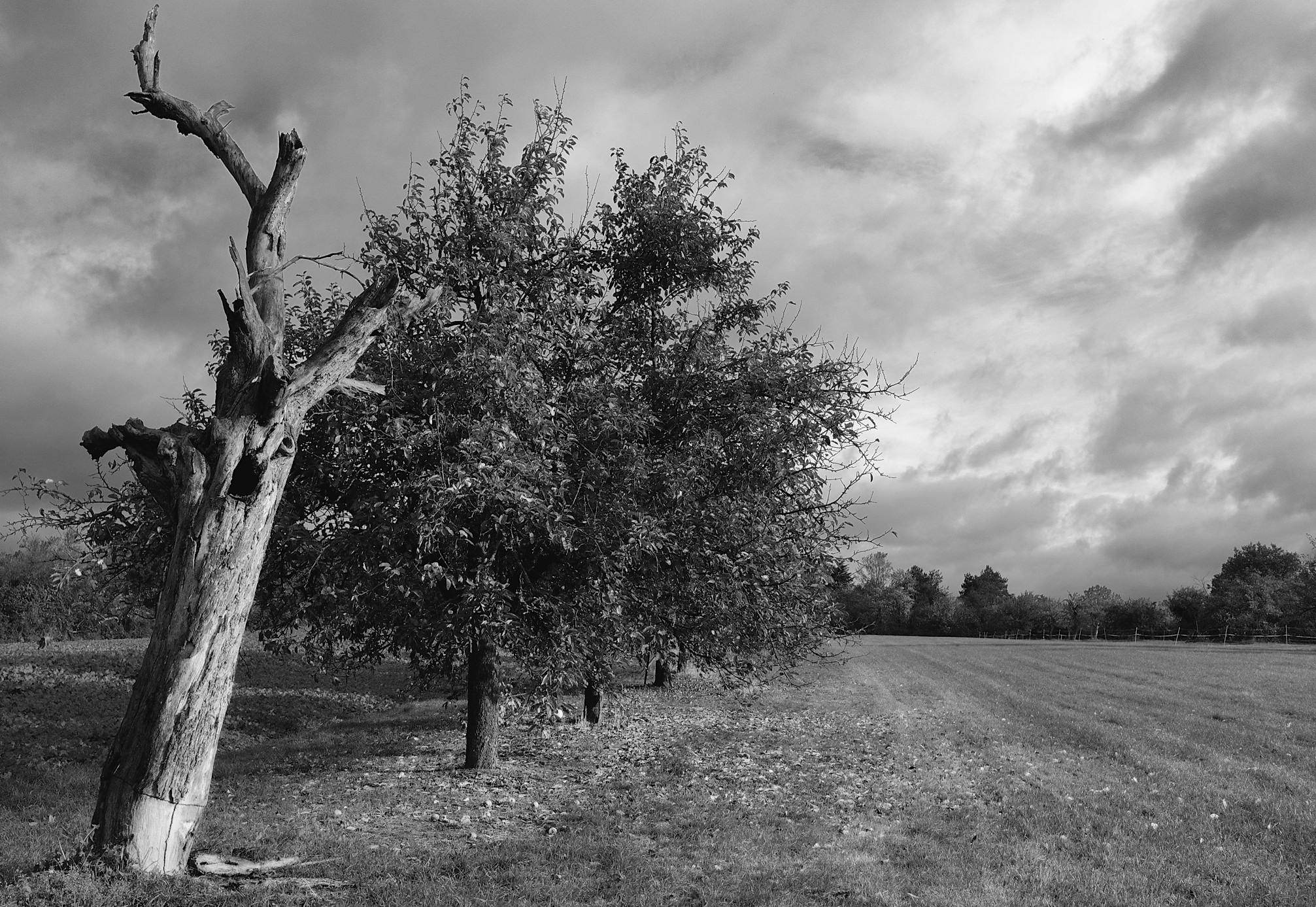 Kronberg -Schönberg: before the fall……