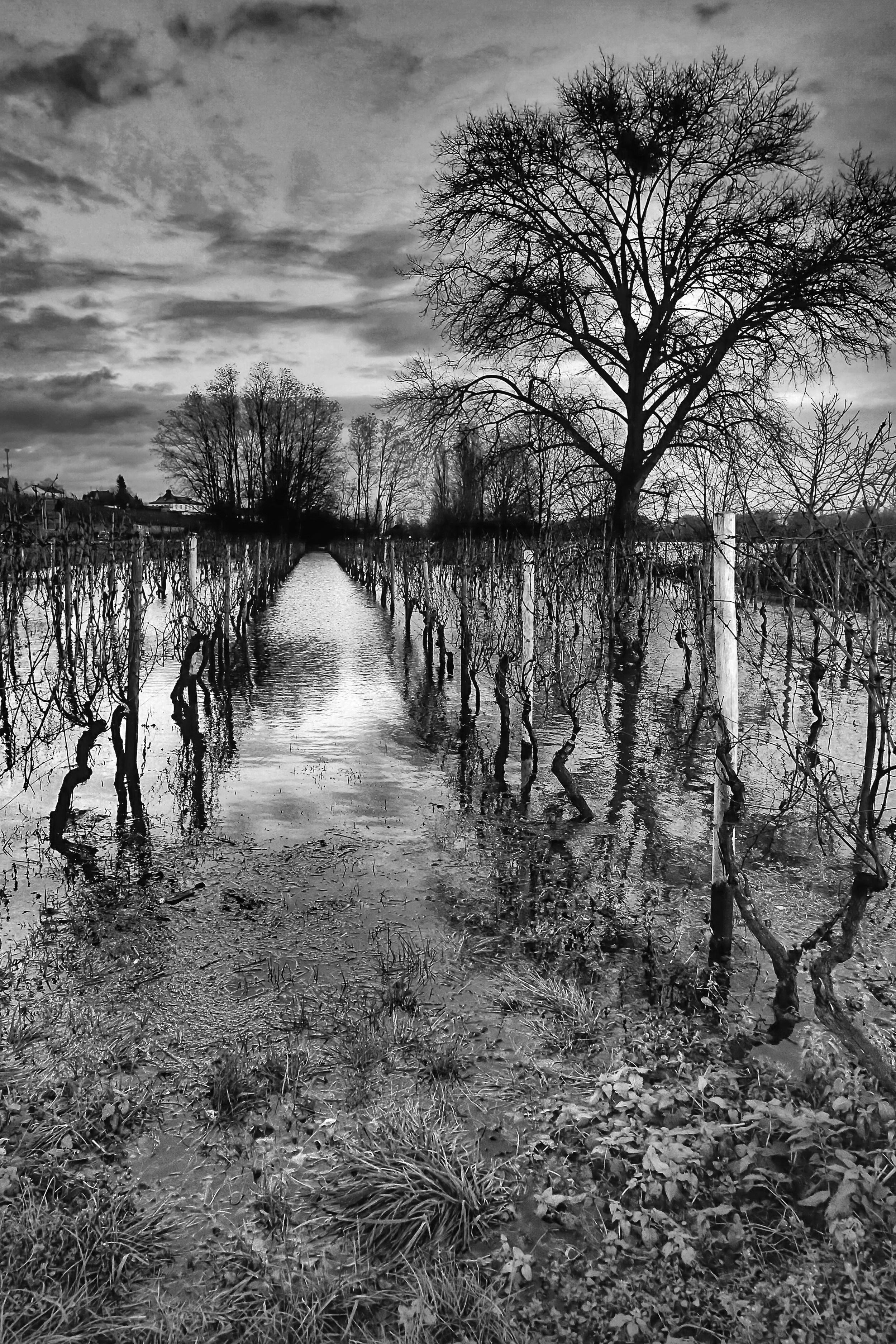 NYE: Vine-in-Rhine