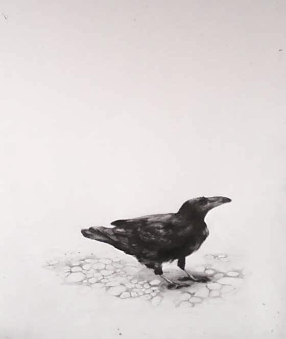 Raven  Graphite on paper, 24X36