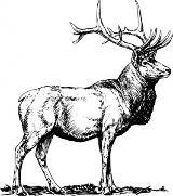 elk-clip-art_f.jpg