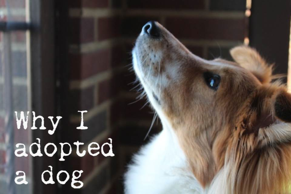 Why I adopted a dog 2.jpg