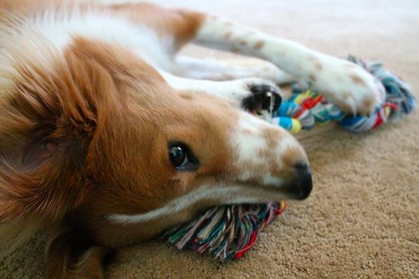Why I adopted a dog 1.jpg