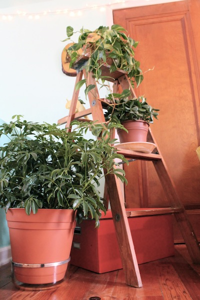 houseplants5.jpg