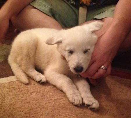 zelda puppy.jpg