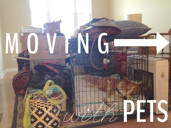 Moving with Pets |  Rental Revival