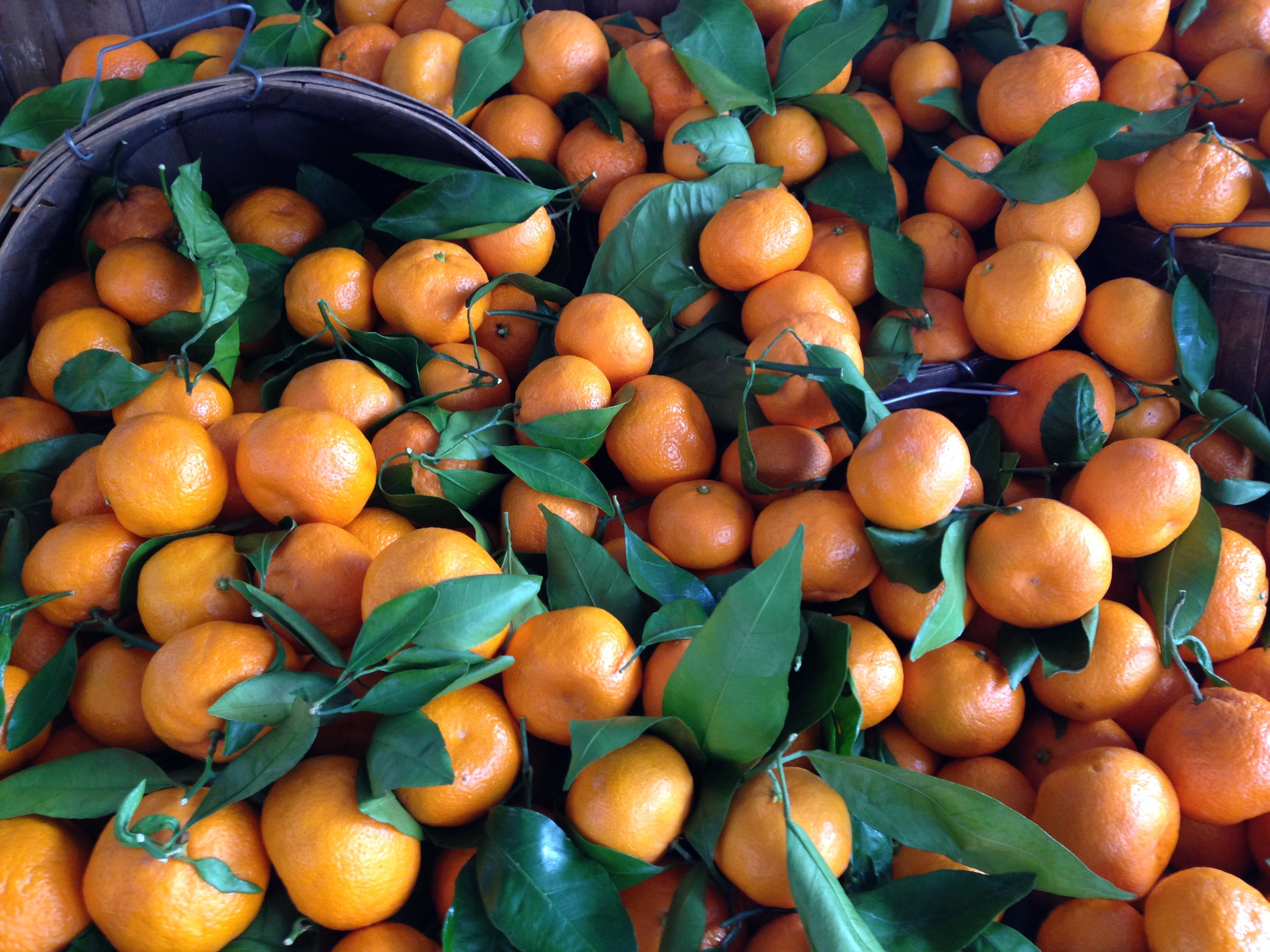 Fresh Mandarin Oranges from the Brentwood Farmers Market
