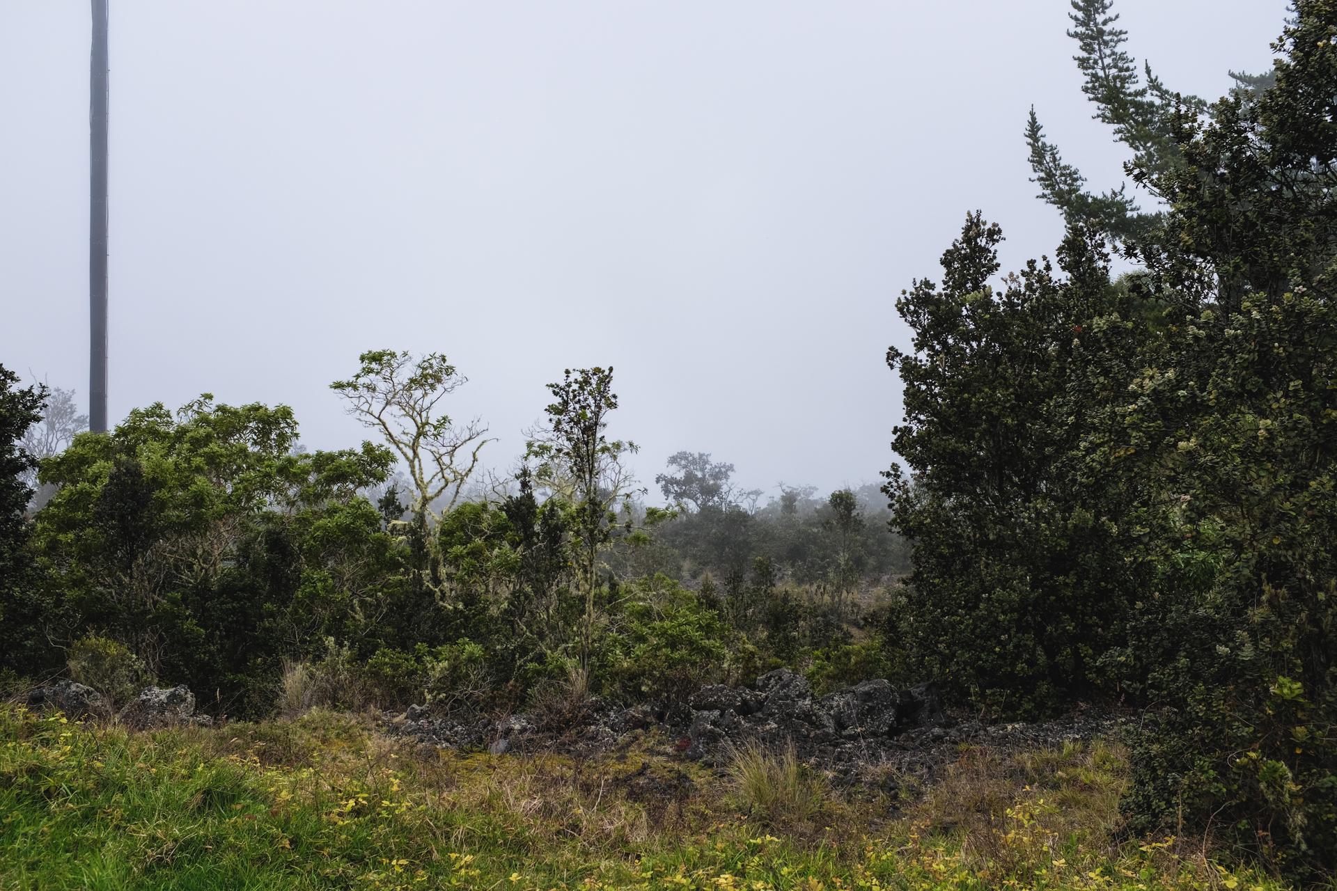 Hawaii-6487.jpg