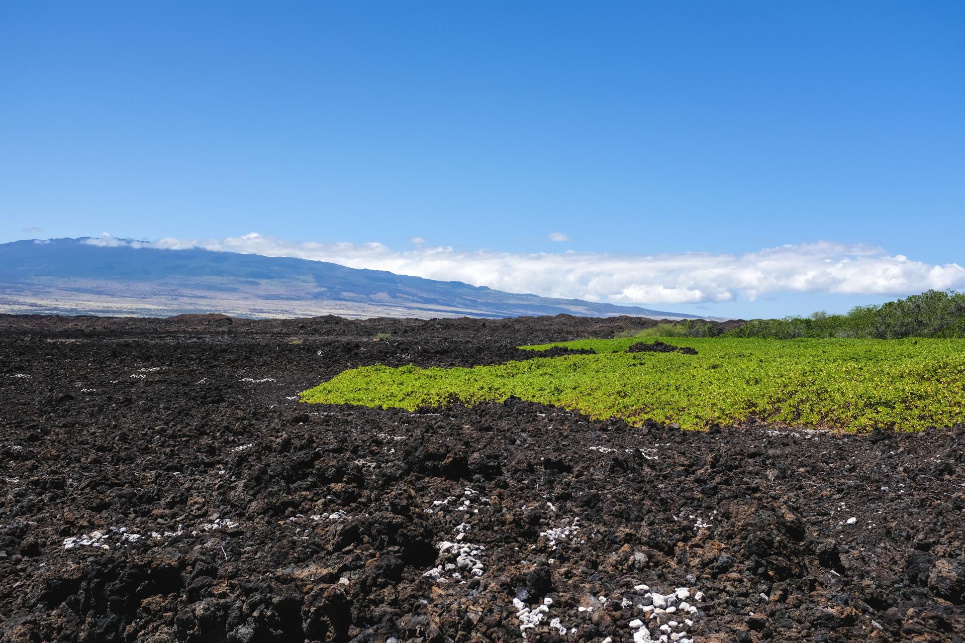 Hawaii-6614.jpg