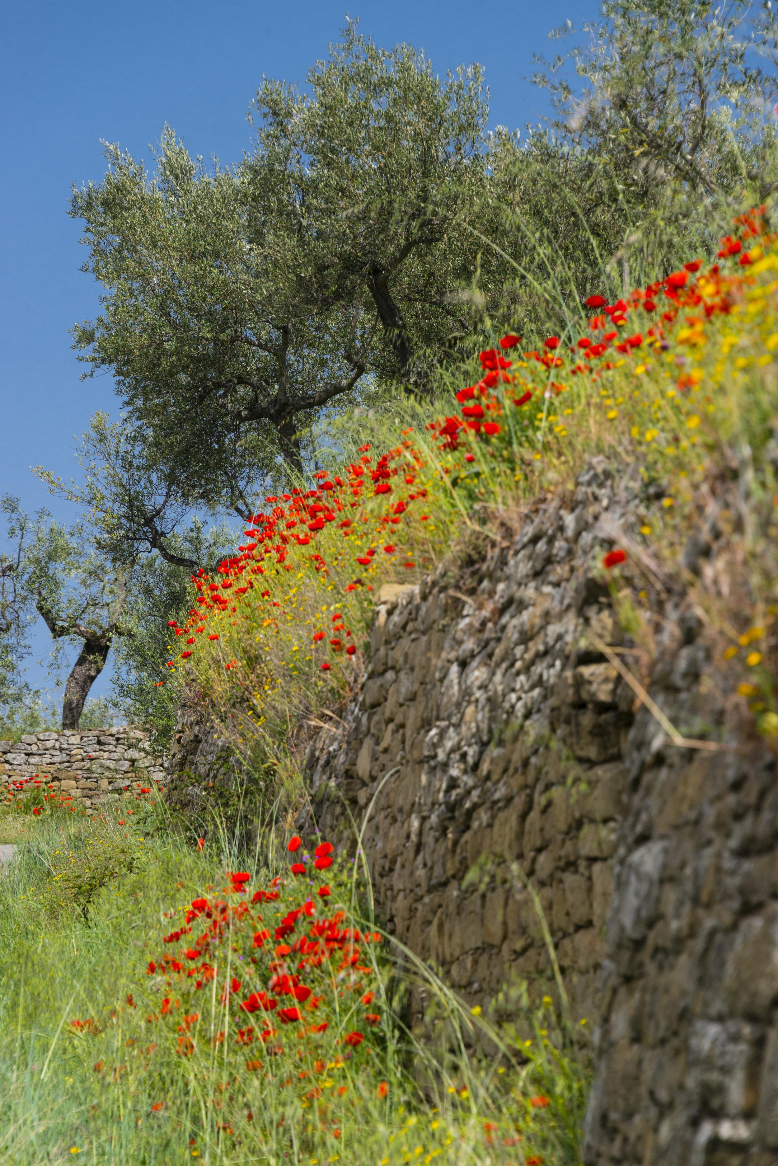 Road to Cortona, Tuscany