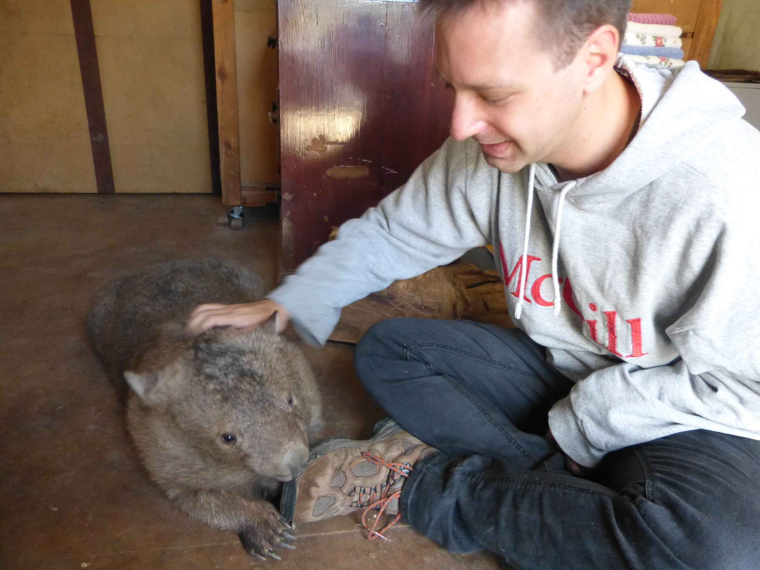 Dawn fortunately preferred to nip my shoe. I was not so lucky with all the wombats.