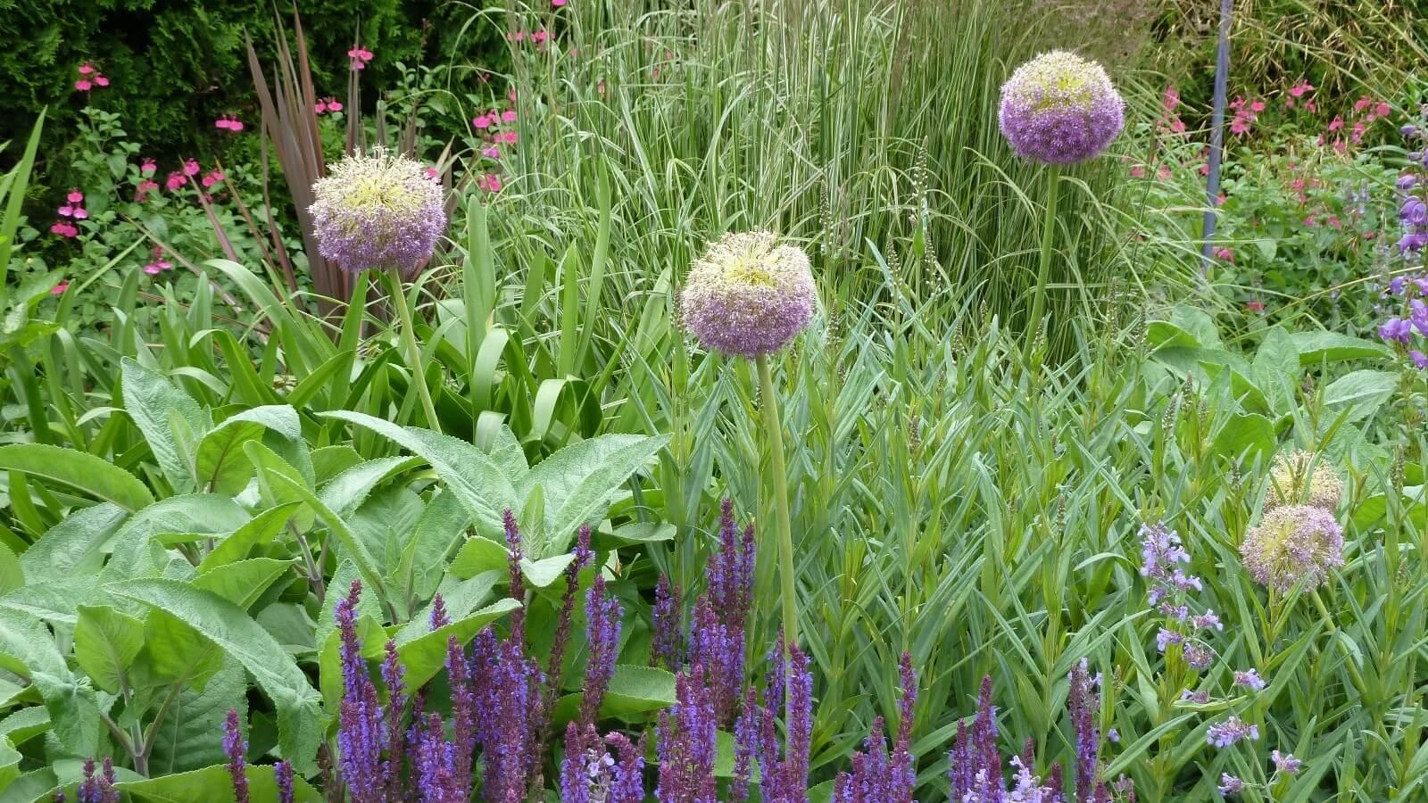 gardenspace
