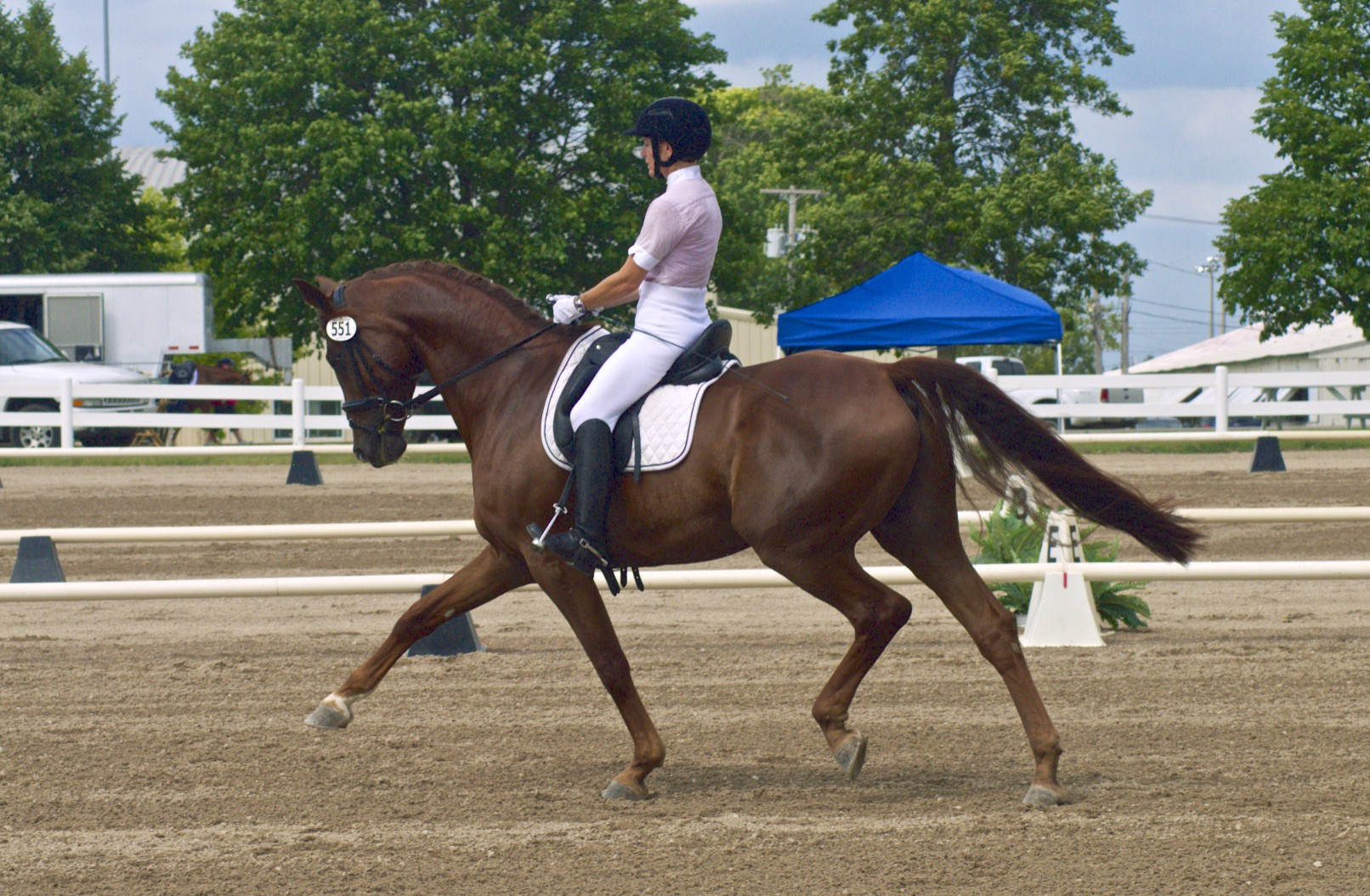 Rubico&Patti Blackmore won both Dover Medals as well as the Second Level highpoint
